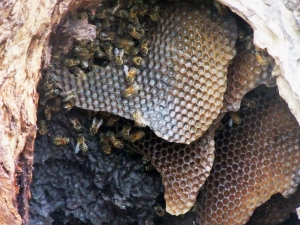 bees-1444939-m