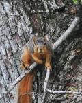 Squirrel - Set Up Adventure