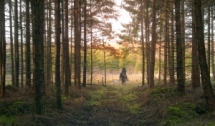 ride-through-farytale-forest-1407139-m