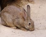 rabbit-1402890