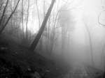 forest-and-fog-1406291