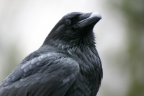 quote-the-raven-1475620