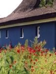blue-house-1190202