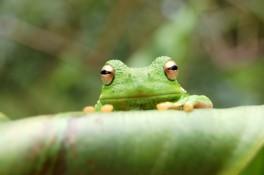 frog-1390604